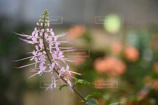 近くの花のアップの写真・画像素材[1848720]