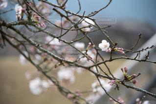 皆を待つ一輪の花の写真・画像素材[1884558]