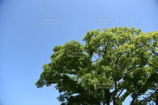 木のクローズアップの写真・画像素材[2350967]