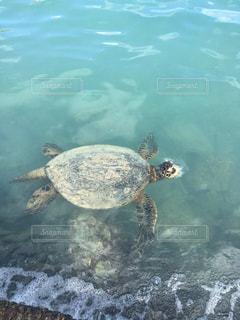水の下で泳ぐ海亀の写真・画像素材[852880]