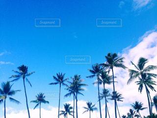晴れた日にヤシの木のグループの写真・画像素材[853607]