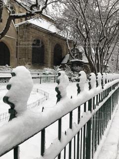 La neigeの写真・画像素材[1076022]