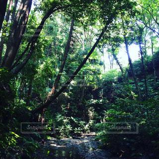 森の写真・画像素材[853056]
