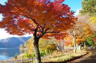 河口湖沿いの紅葉の写真・画像素材[854411]