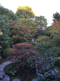 京都、東寺 - No.853485