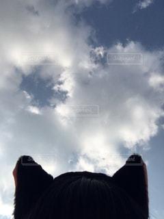 猫は空を見上げるの写真・画像素材[853637]