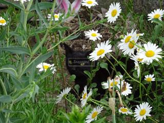 花と猫の写真・画像素材[871695]