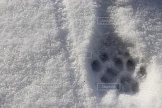 雪に足跡の写真・画像素材[979505]
