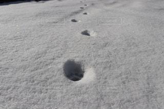 雪に足跡の写真・画像素材[979507]
