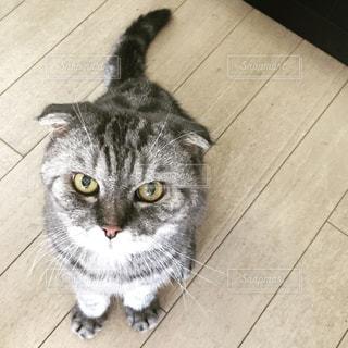 おすわりネコの写真・画像素材[854370]