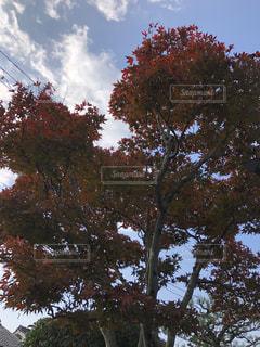 近くの木のアップの写真・画像素材[855620]