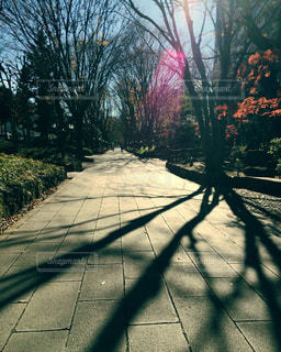 歩道の上のヤシの木の写真・画像素材[853964]