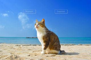 ビーチに座っている猫の写真・画像素材[854371]