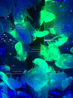 アクアパーク品川にてクラゲを撮影の写真・画像素材[855145]