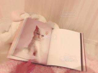 猫の本 - No.1005332