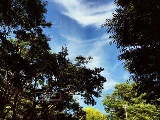 自然の写真・画像素材[47535]