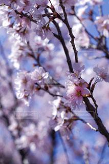 青空と桜 - No.1062451