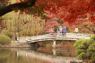 池の上にかかる橋の写真・画像素材[1525614]