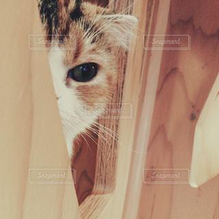 大好きな猫さんとかくれんぼの写真・画像素材[858247]