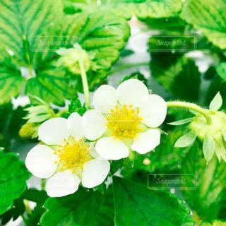 近くの花のアップの写真・画像素材[855509]