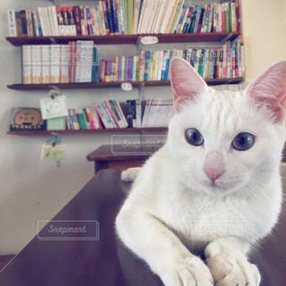 本好きな猫の写真・画像素材[856914]