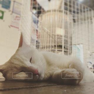 ストーブの横で寝る猫の写真・画像素材[856915]