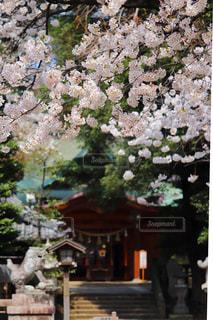 春の写真・画像素材[1120747]