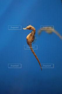 海の生き物の写真・画像素材[1478977]