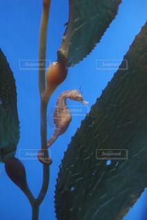 海の生き物の写真・画像素材[1478978]