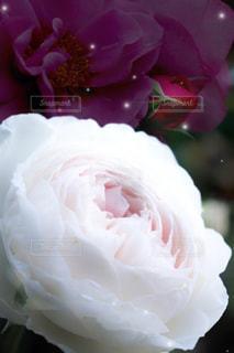 花のクローズアップの写真・画像素材[2140893]