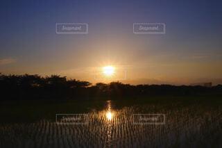 田圃と夕日の写真・画像素材[4570753]