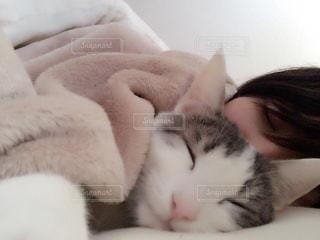 猫とお昼寝 - No.855971