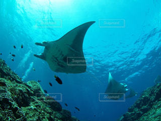 水面下を泳ぐ魚たちの写真・画像素材[856315]
