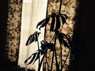植物 - No.857508