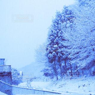 雪の写真・画像素材[856705]