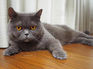 猫の写真・画像素材[3322838]
