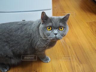 猫の写真・画像素材[3322845]
