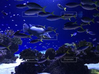 鮮やかな青い水槽で泳ぐ魚たちの写真・画像素材[891271]