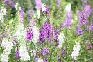 近くの花のアップの写真・画像素材[859563]