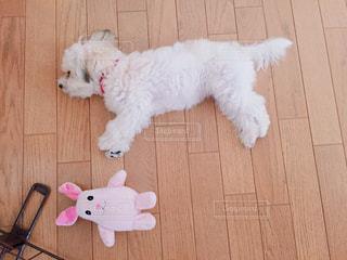 うさぎのぬいぐるみと犬の写真・画像素材[857704]