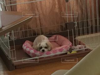 ベッドの上に座っている犬の写真・画像素材[886857]