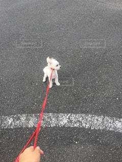 おさんぽから帰りたくない犬の写真・画像素材[886858]