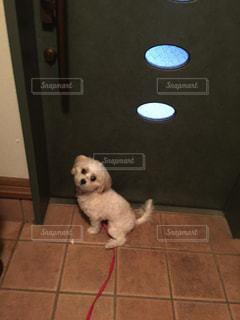 お出かけしたい犬の写真・画像素材[886859]