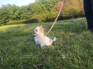 草の上に犬立ってカバー フィールドの写真・画像素材[886882]