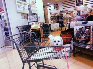 椅子に座っている犬の写真・画像素材[1025333]