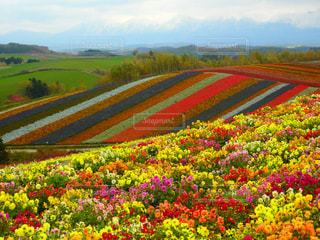 北海道の花たちの写真・画像素材[858001]