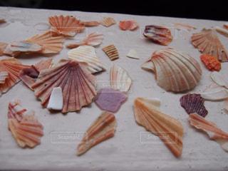 貝殻の写真・画像素材[858518]