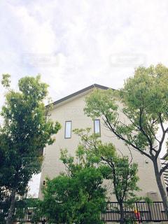 大きな木と家の写真・画像素材[858735]