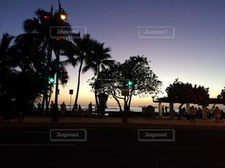 ヤシの木の横のトラフィック ライトの写真・画像素材[865837]