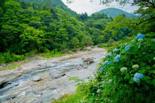 鬼怒川の川の写真・画像素材[859280]